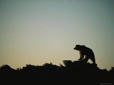 A Silhouetted Grizzly Bear Atop an Ice Mountain