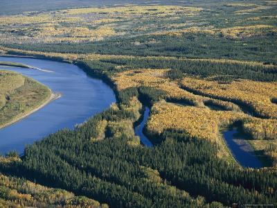 A View of Spruce Trees Along the Mackenzie River at Camsell Bend