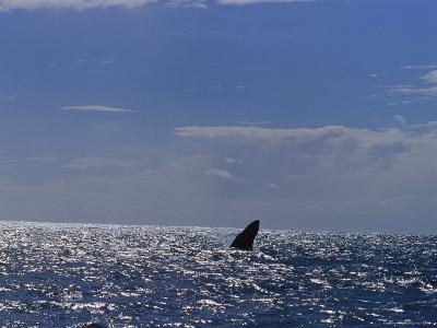 A Silhouetted Humpback Whale Fin after a Breach off of Australia