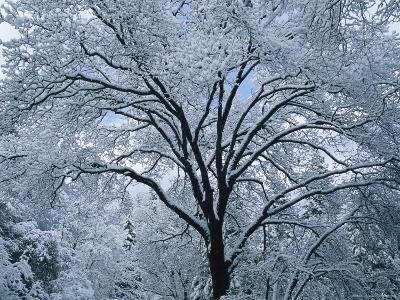 A Winter Wonderland of Snow-Covered Trees