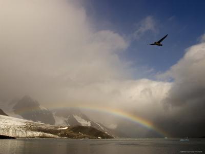 A Northern Fulmar Soars Above a Rainbow at Spitsbergen Island