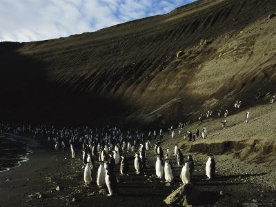 Penguins Crowd Together on a Beach Rimmed by Tall Cliffs