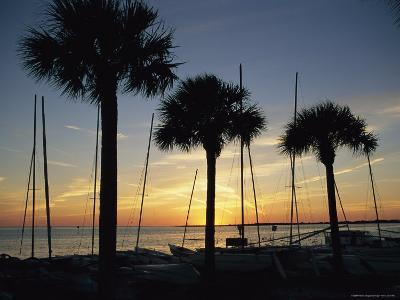Silhouetted Palm Trees and Catamarans Line a Shoreline at Twilight