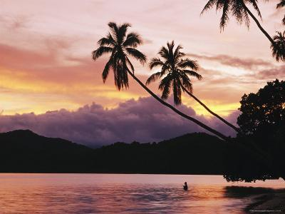 Palms, Trees, and Bather Silhouetted at Sunrise