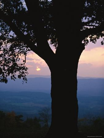 Sunset and Silhouetted Oak over the Shenandoah Valley, Dickeys Ridge Visitors Center