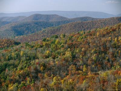 Fall Colors in Forests Along Tanners Ridge, with View of Massanutten Mountain