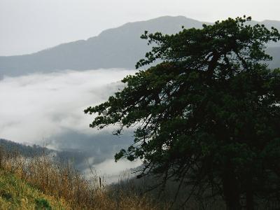 Fog in Valley Below Old Rag Mountain