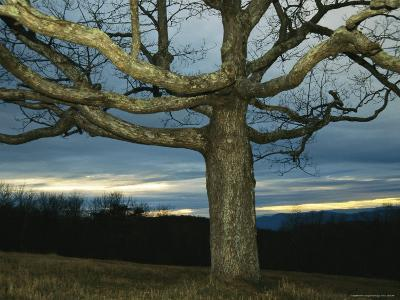 Sunset at Big Meadows with Bare Oak Tree