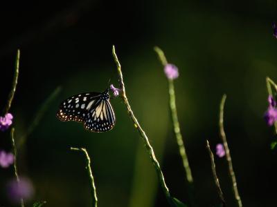 A Butterfly Feeding on a Small Purple Flower