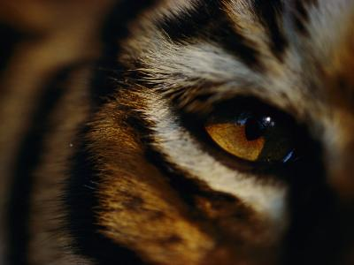 Close View of Tigers Eye