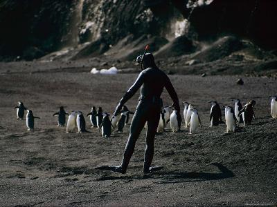 A Self-Portrait of Bill Curtsinger with a Group of Chinstrap Penguins
