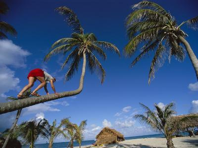 A Woman Climbs a Palm Tree for Some Coconuts