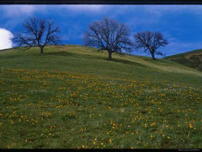 A Scenic View of Wildflowers Along a Hill on the Ohlone Wilderness Trail