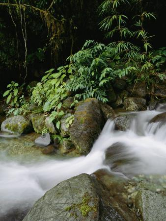 Time Exposure of a Little Brook Flowing over Rocks in a Rain Forest