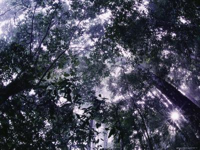 Sunlight Filters Through the Canopy of a Rain Forest