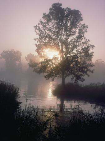 The Sun Shines Through Early-Morning Fog onto Water Bordered by Trees and High Grass