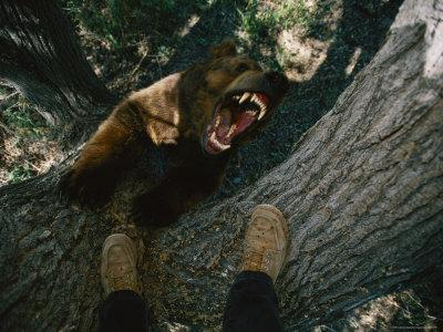 A Trained Bear Trees Photographer Joel Sartore