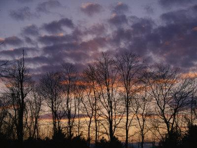 Twilight Sky over a Grove of Trees