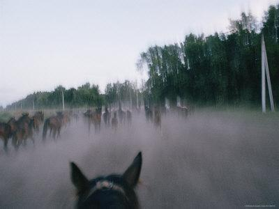 View from Atop a Horse of a Group of Moving Horses