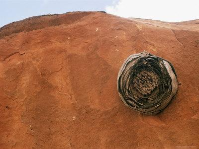 Insect Hive Resting on Sandstone