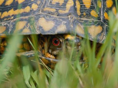 Close View of a Terrapin