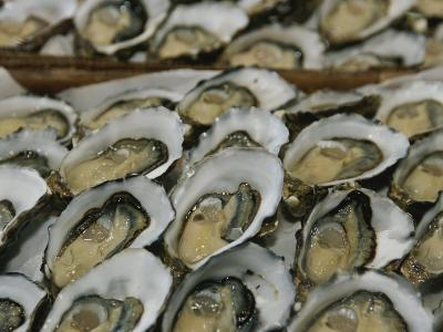 Oysters on the Half-Shell Glisten with Briny Sweetness