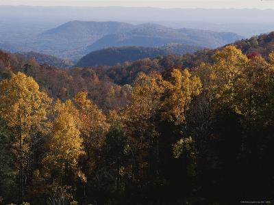 Autumn Colors Paint a Beautiful Fall Forest Landscape