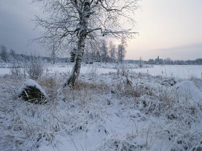 Winter Scene with Snow-Covered Grasses and Tree Next to Frozen Stream