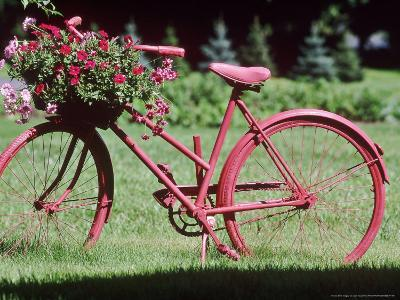 Red Bicycle with Flower Arrangement on the Handle Bars
