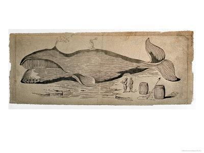 Captured Whale