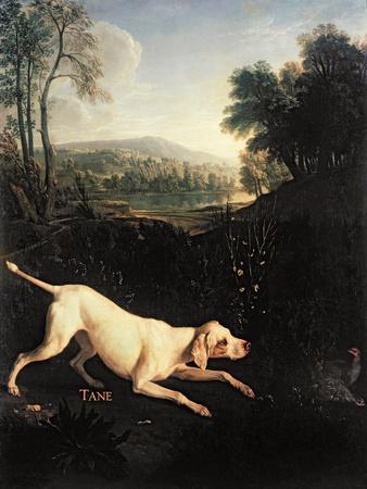 Louis XIV's Dog, Tane