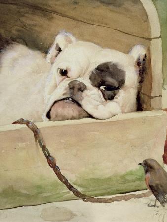 Bulldog, 1927