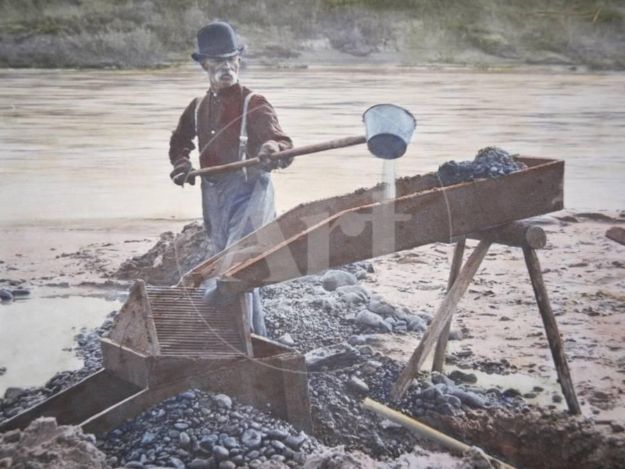 American Gold Prospector Using a Sluice Box