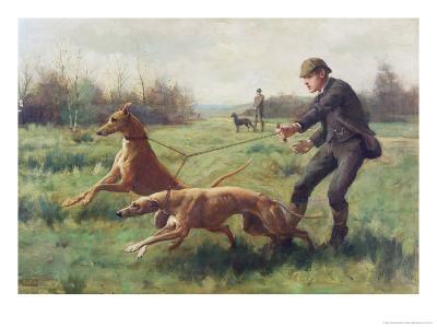 Exercising Greyhounds