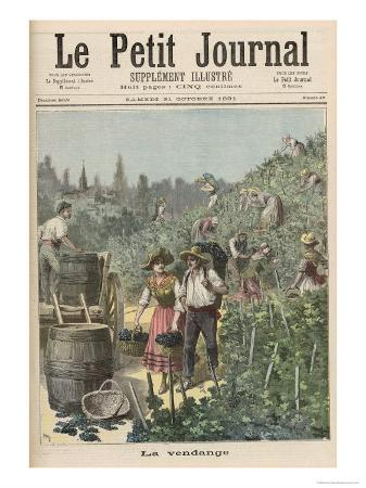 The Wine Harvest, from Le Petit Journal, 31st October 1891