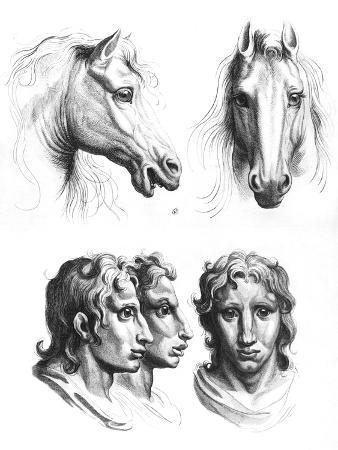 Similarities Between the Heads of a Horse and a Man