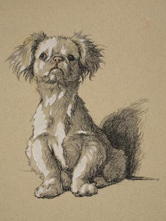 Peke, 1930, Ifrom His Sketch Book Used For Just Among Friends, Aldin, Cecil Charles Windsor