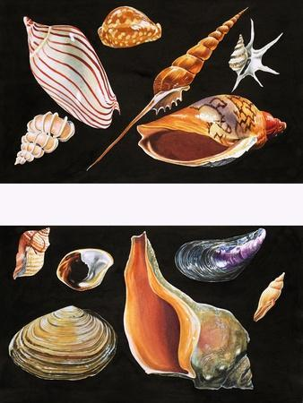 All Sorts of Sea Shell, Illustration from Once Upon a Time, 1970