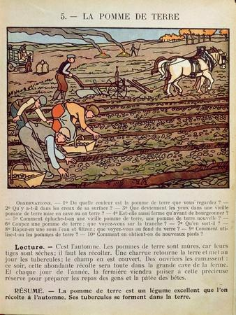 Page from a School Textbook Illustrating the Cultivation of the Potato, c.1910