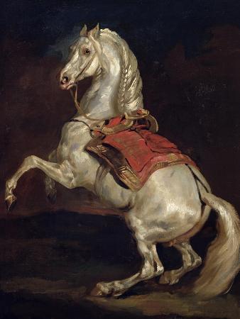 Napoleon's Stallion, Tamerlan