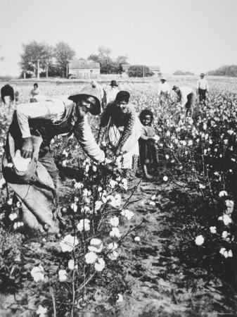 Black Cotton Pickers, c.1900