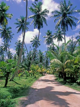 Palm Tree Lined Road of L'Union Estate Plantation, Seychelles