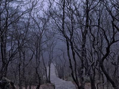 Mountain Forest Path, Mt. Huangshan (Yellow Mountain), China