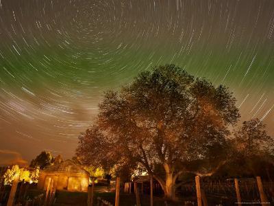 Star Trails Over Walnut Tree, Domain Road Vineyard, Central Otago, South Island, New Zealand