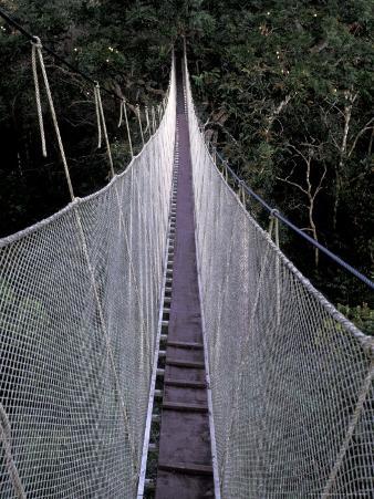 Canopy Walkway in the Peruvian Rainforest, Sucusari River Region, Peru