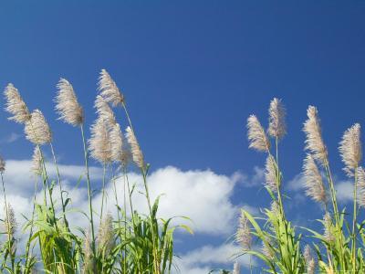 Back Country Sugar Cane Field, Kauai, Hawaii, USA