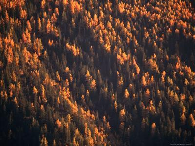 Aerial View of Forest at Dusk, New York, USA
