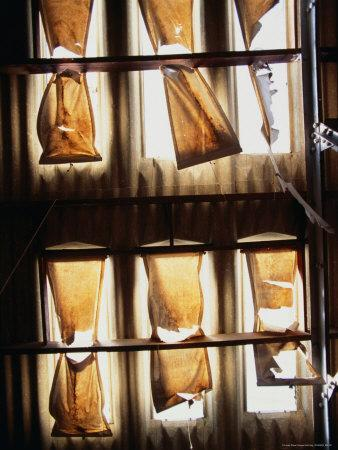Sugar Bags Over Skylights of a Shearing Shed in Western District, Victoria, Australia