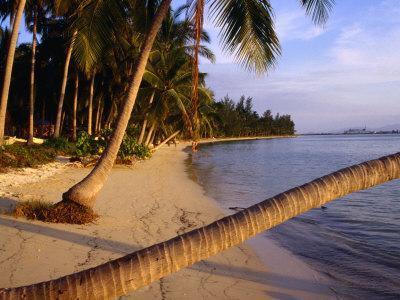Palm Trees on Beach, Thailand