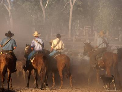 A Group of Stockmen Mustering Cattle on New Dixie Station, Queensland, Australia